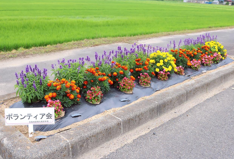 写真:花壇コンクール最優秀花壇賞吉島ボランティア会の花壇