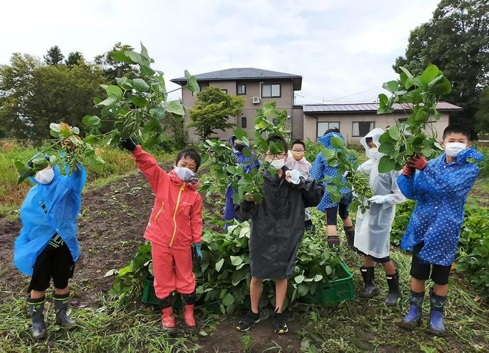 写真:第3回わんぱくキッズスクール:畑で収穫している児童